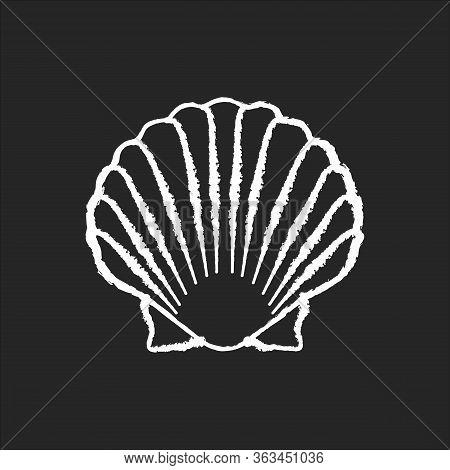Scallop Shell Chalk White Icon On Black Background. Exotic Seashell, Decorative Conch. Ocean Souveni