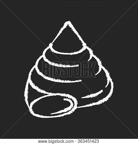 Top Shell Chalk White Icon On Black Background. Exotic Snail Cockleshell, Conchology Cittarium Pica.