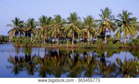 View On The Lush Coconut Palm Trees Near To A Backwater Lake On A Backgroung Of Blue Clear Sky.beaut