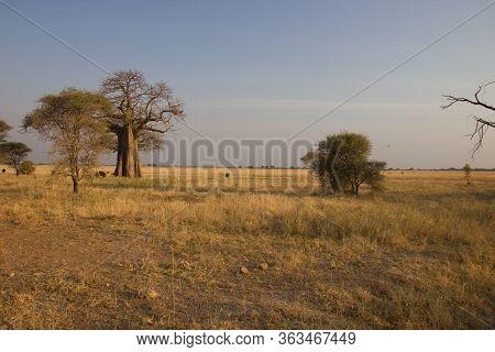 African Steppe Under The Golden Sunlight Of A Sunrise