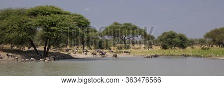 Elephants At A Billabong In The African Steppe