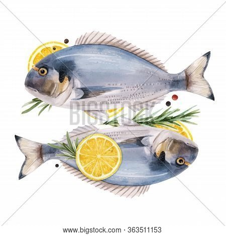 Beautiful Vector Stock Illustration With Watercolor Hand Drawn Dorado Fish.