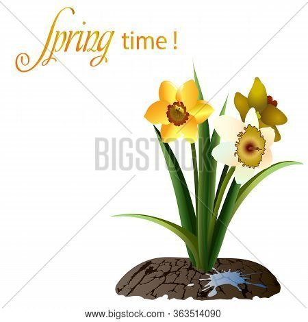 Spring Card With Daffodils And Text.daffodils And Text On A White Background In Vector Illustration.
