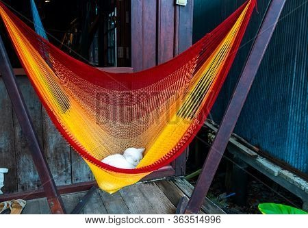 Young Kitten Is Lying In Hammock Near The Wooden House. Cat Of White Color Is Sleeping In Red, Orang