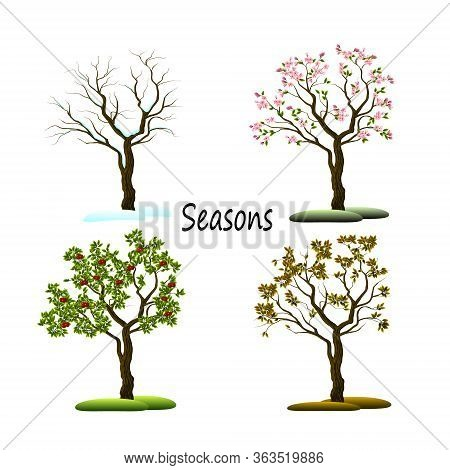 Vector Illustration Of The Four Seasons.illustration Of A Tree In The Four Seasons.
