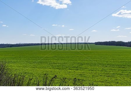 Huge Green Fields Of Winter Crops In Spring. The Natural Wealth Of The Earth. Winter Crops And Blue