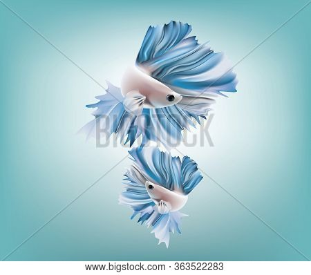 6689_siamese_fighting_fish