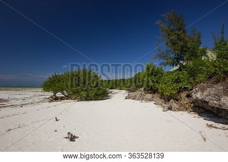 Shrubbery On A Withe Sand Beach In Africa