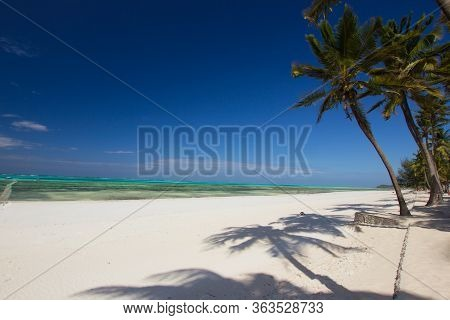Palm Tree At A White Beach On A Sunny Day (paradise)