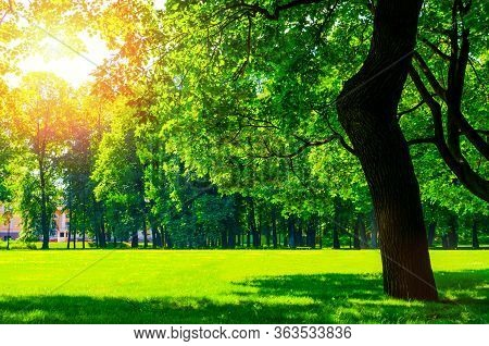 Summer sunny park landscape. Summer city park with deciduous summer green trees in sunny weather