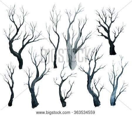 Gray Black Black Forest, Trees And Branches, Watercolor Hand Drawing