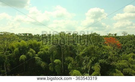Panoramic View Of A Tropical Forest. Sierra Nevada National Park Of Santa Marta. Colombia.