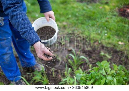 Fertilizing The Garden By Bio Granular Fertilizer For Better Conditions Of Garden, Gardening Concept