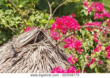 The Small House With Red Flowers On Zanzibar