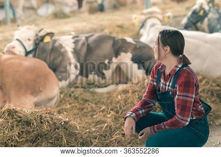 Female Farmer On Cow Dairy Farm. Portrait Of Woman Farm Worker Wearing Plaid Shirt And Bib Overalls