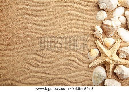 Starfish And Seashells On Sandy Beach. Top View