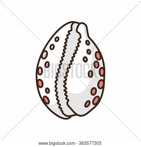 Cowrie Shell Rgb Color Icon. Decorative Ocean Souvenir, Conchology Luria Cinerea. Empty Molluscan An