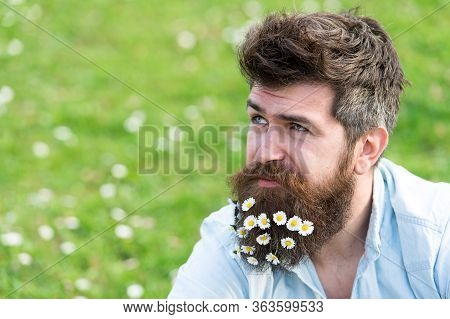 Natural Beauty Product Concept. Hipster On Dreamy Face Sits On Grass. Guy Looks Nicely With Daisy Or