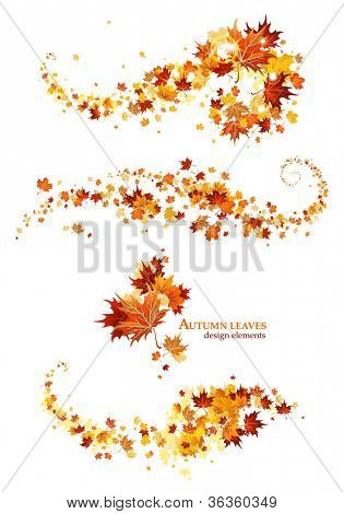Autumn leaves design elements