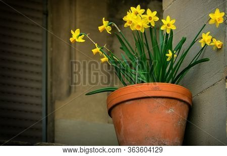 A Bunch Of Fresh Yellow Flowers In Front Of A Closed Window