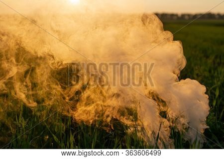 Big Smoke Bomb In Young Wheat. The White Smoke In Grass Against Evening Sun. Sun Near Horizon.