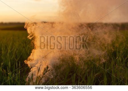 Big Strikeball Smoke Grenade In Young Wheat. The White Smoke In Grass Against Evening Sun. Sun Posit