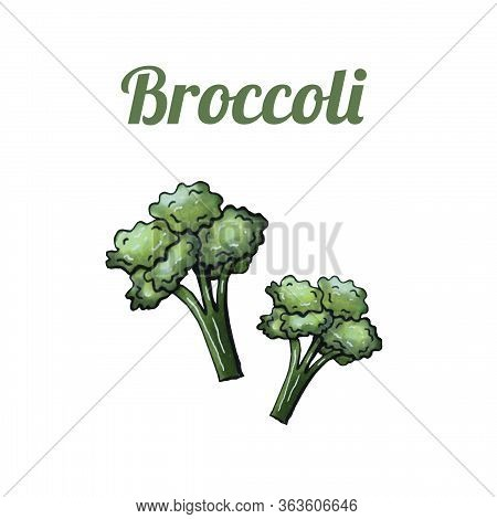 Fresh Hand-drawn Brocoli. Drawing Healthy Food. Marker Illustrations. Can Be Used For Printing On Fa