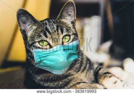 Cat In A Protective Mask. Stay Home Covid-19 Virus Concept