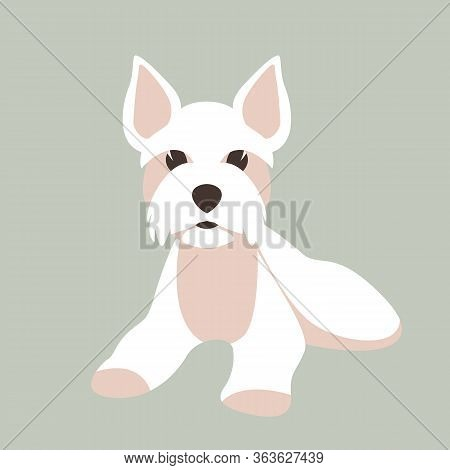 Maltese Dog, Vector Illustration, Flat Style, Front View