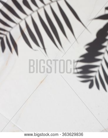 Transparent Shadow Of Tropical Leaves. Minimal Background Shadow Palm Leaves On The White Marble. Bl