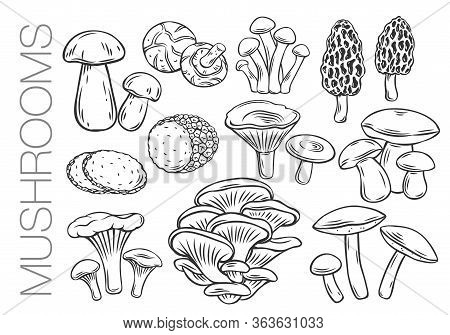 Edible Mushrooms Outline Vector Icons. Engraved Forest Plants, Natural Protein Food. Drawn Mushrooms