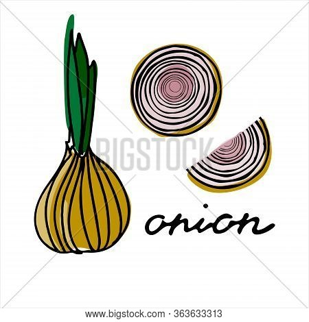 The Whole Onion And Several Segments Of Onion. Colorful Vector Illustration With Hand Lettering. Per
