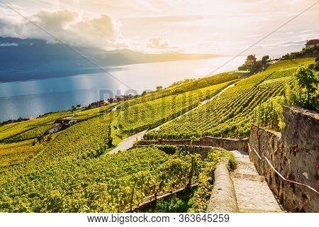 Lavaux, Switzerland: Lake Geneva And The Swiss Alps Landscape Seen From Lavaux Vineyard Hiking Trail