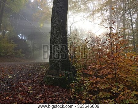 A Forest In Autumn In A Realy Foggy Day, A Tree Surrounded By Plants