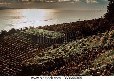 Lavaux, Switzerland: Lake Geneva And The Swiss Alps Landscape Seen From Lavaux Vineyard Tarraces In