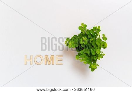 Word Home Written With Wooden Letters And Small Green House Plant On White Background. Sweet Home, E