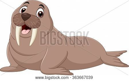 Vector Illustration Of Cartoon Walrus Isolated On White Background