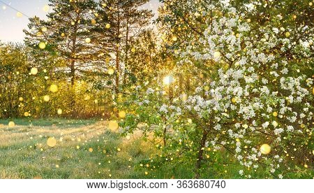 Beautiful Amazing Spring Forest Panorama Landscape With A Flowering Apple Tree And A Meadow. Sunrise
