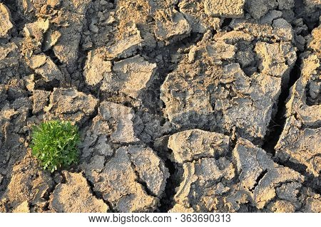 Dry And Hot Cracked Soil With Small Green Plants