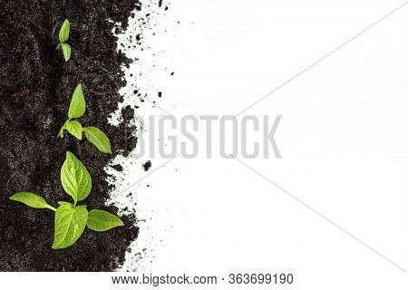 Plant Germination And Growth, Concept Green World Earth Day. The Concept Of Environmental Stewardshi