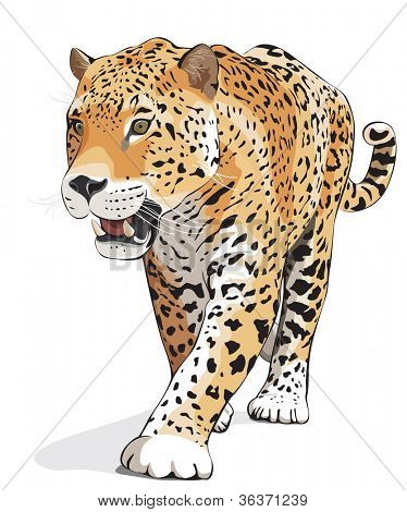 Jaguar, wild cat Panther. Vector illustration, White background, shadow. Photos of jaguars in portfolio