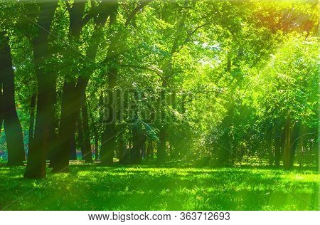 Summer sunny park landscape. Summer city park with deciduous green trees in sunny weather