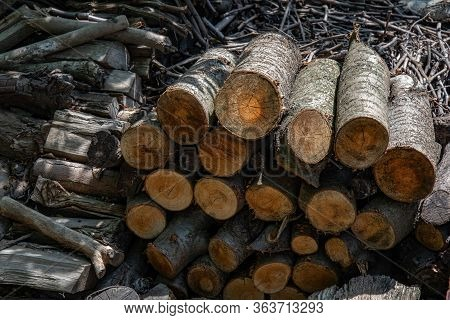 Woodpile Of Cut Firewood And Branches. Traditional Rural Fuel Concept. Rough Wooden Textures Of Tree
