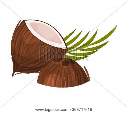 Halved Coconut With Hard Shell And Fibrous Husk And Pinnate Leaf Vector Illustration