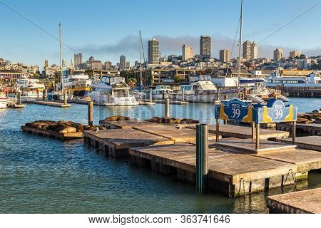 San Francisco, California, Usa- 07 June 2015: Walruses On Wooden Piers In The Marina At Pier 39, Yac