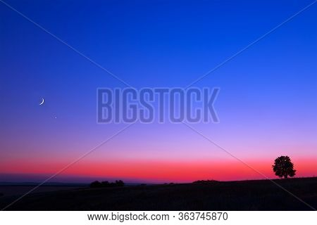 A Famous Sanset. A Lonely Tree. The Sky With The Moon And The Starlight. A Beautiful Gradient Of Col