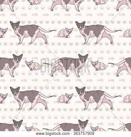 Cute Cartoon Sphynx Kitten And Cat Seamless Vector Pattern. Pedigree Exotic Kitty Breed Domestic Cat