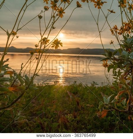 Brittlebush Framing A Sunrise Over A Lake With Focus On The Flowers At Lake Pleasant In Arizona.