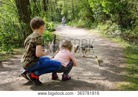 Two Siblings Kids, Cute Little Toddler Girl And School Boy Feeding Wild Geese Family In A Forest Par
