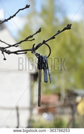 Several Keys To The House Hang On A Tree Branch. Lost Key Ring. At Close Range. Concept: Lost Item O
